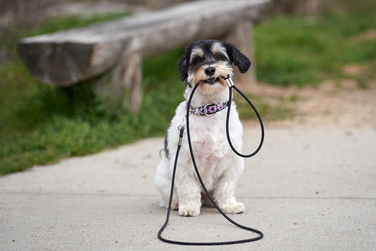 Dog Leash with Handle