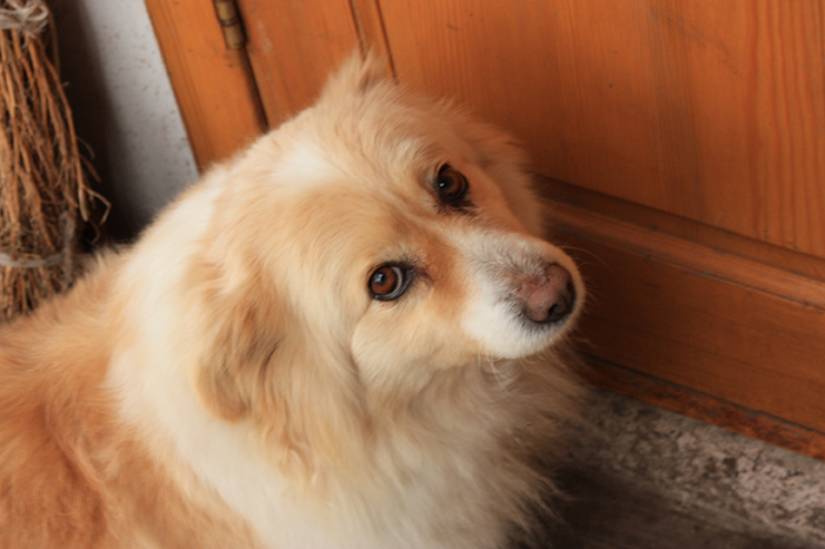 dog with separation anxiety waits at door